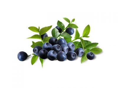 Bilberry health benefits, key natural values, therapeutic properties. How to make bilberry cooking & eating? Bilberry recipes shared on page.