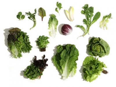 Lettuce & salad greens health benefits, key natural values, therapeutic properties. How to make lettuce & salad greens cooking & eating? Recipes