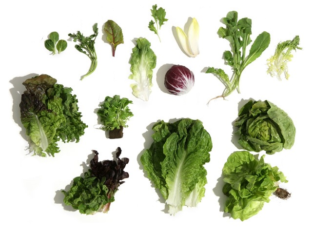 Lettuce and salad greens