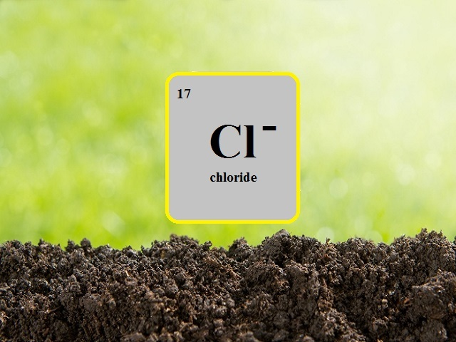 What is chloride mineral? Chloride major sources, chloride importance, chloride effects of shortage, foods high in chloride shared on page.